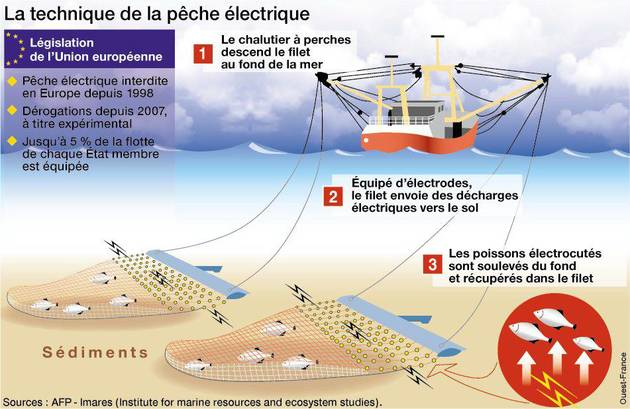 pêche-électrique-bloom