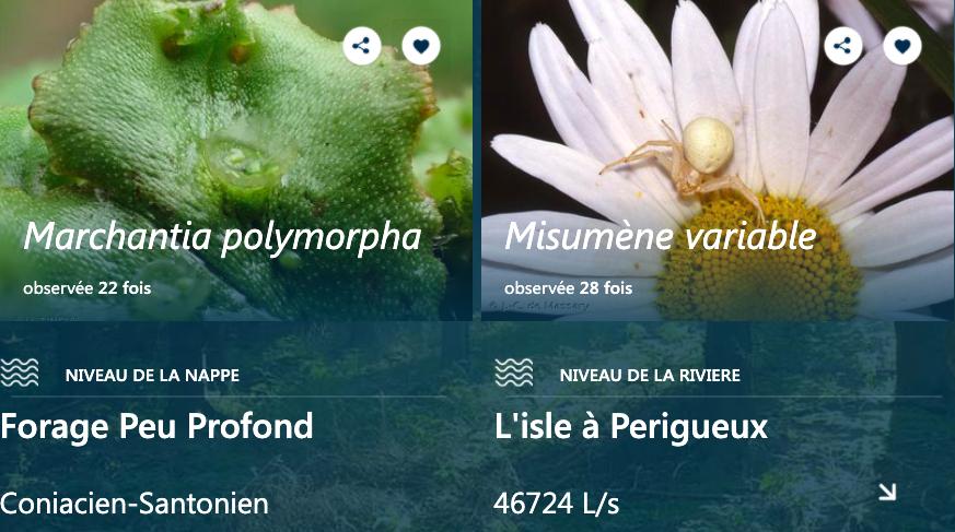 araignée, misumène, insecte
