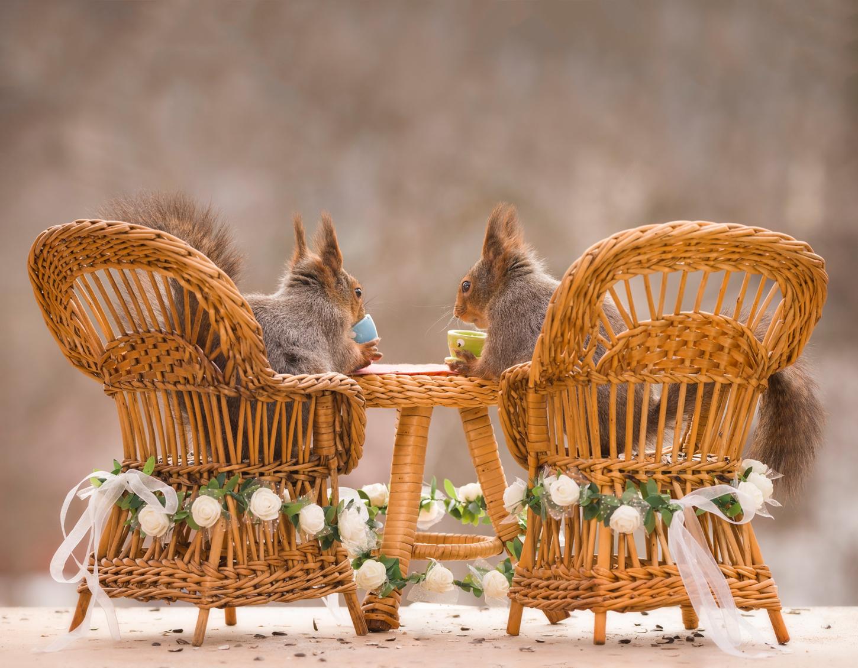 ecureuils-dinette