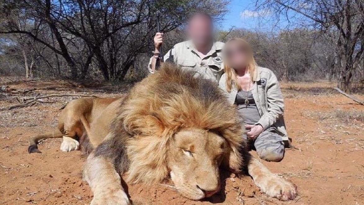 chasse-lion-extinction