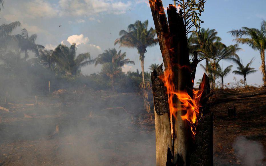 arbre-en-feu-amazonie-incendie