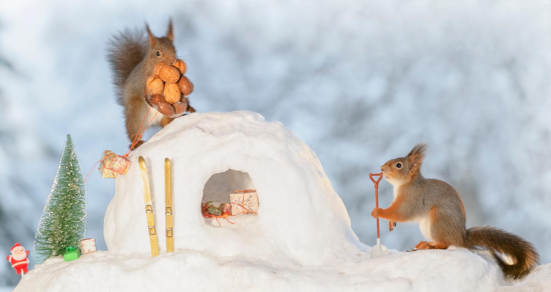ecureils-neige