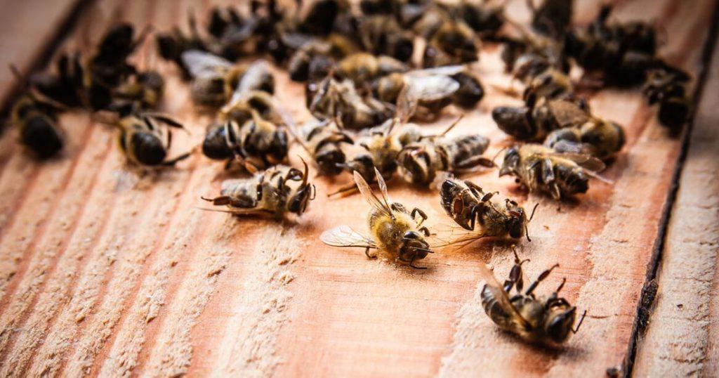 abeilles-mortes-brésil