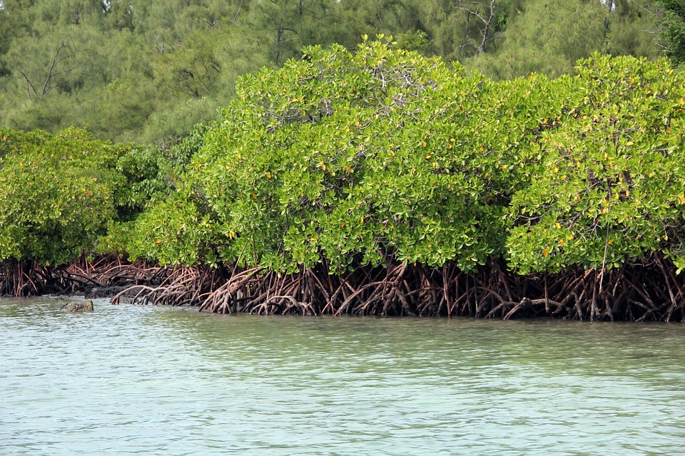 mangroves-tropicales