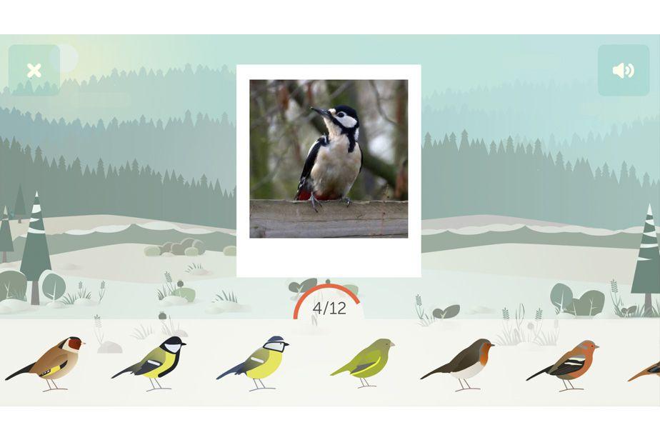 BirdLab quiz