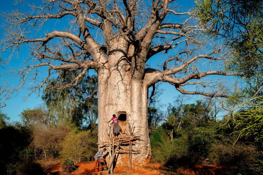 baobab-citerne